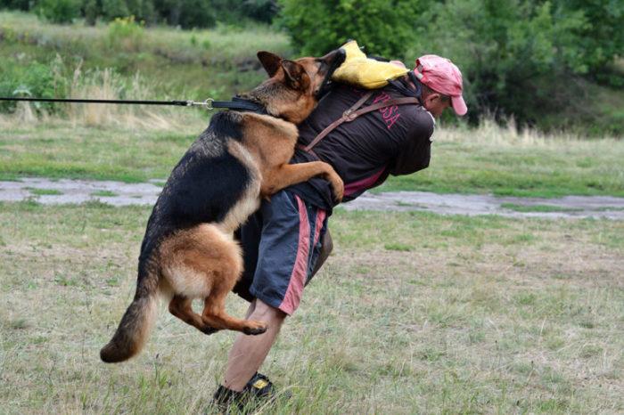 Собака нуждается в правильном выгуле. /Фото: dogs.ru.