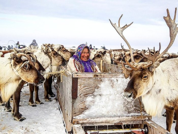 Оленеводство - важная часть хозяйства на севере. /Фото: yandex.kz.