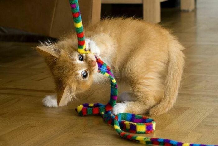 Кот животное своенравное. /Фото: yandex.by.