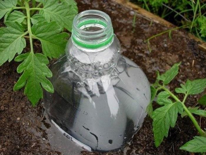 Сверлим бутылку и вкапываем в землю. /Фото: 2sotki.ru.