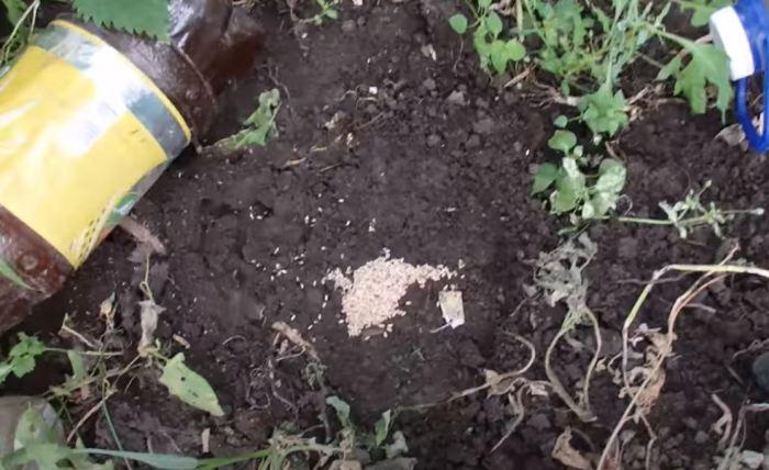 Заливаем муравейник. /Фото: youtube.com.