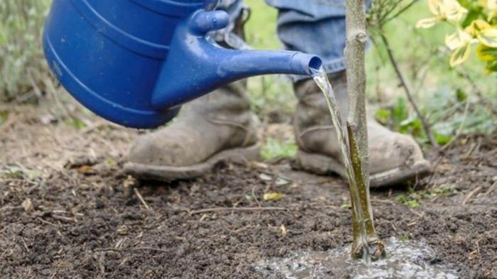 Нужно будет обильно поливать. /Фото: glavagronom.ru.