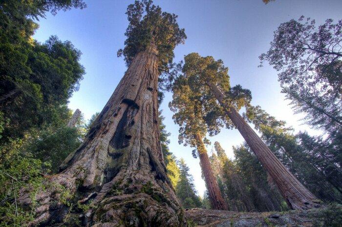 Серьезное деревце. /Фото: Twitter.