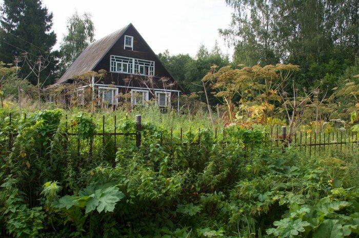 За сорняки придется платить. /Фото: botanichka.ru.