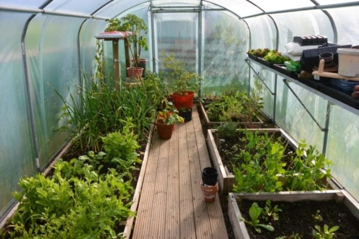 Также нельзя выращивать продукты в промышленных масштабах. /Фото: yandex.kz.