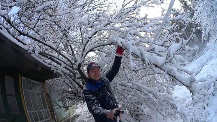 Можно повредить дерево. /Фото: yagodka.club.