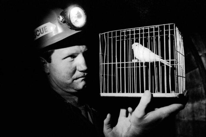 Хорошая и полезная птичка. /Фото: timeandtidewatches.com.