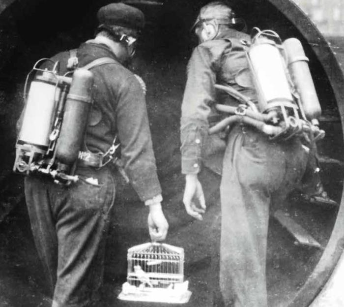 Использовали канареек до конца XX века. /Фото: mirinteresen.net.
