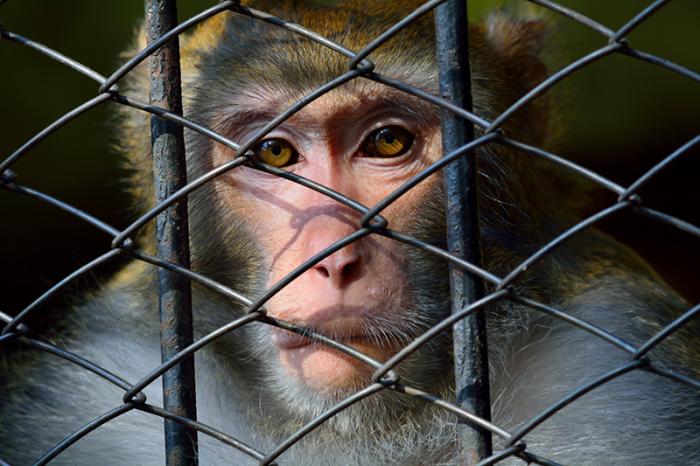 Убивать священное животное нельзя. /Фото: australasianscience.com.au.