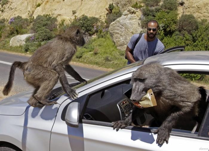 На самом деле опасные звери. /Фото: livejournal.com.
