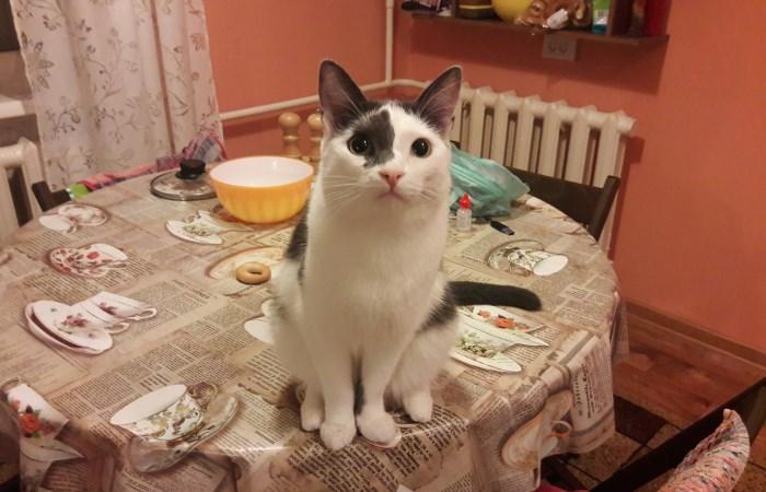 Сложная задачка про кота на столе.