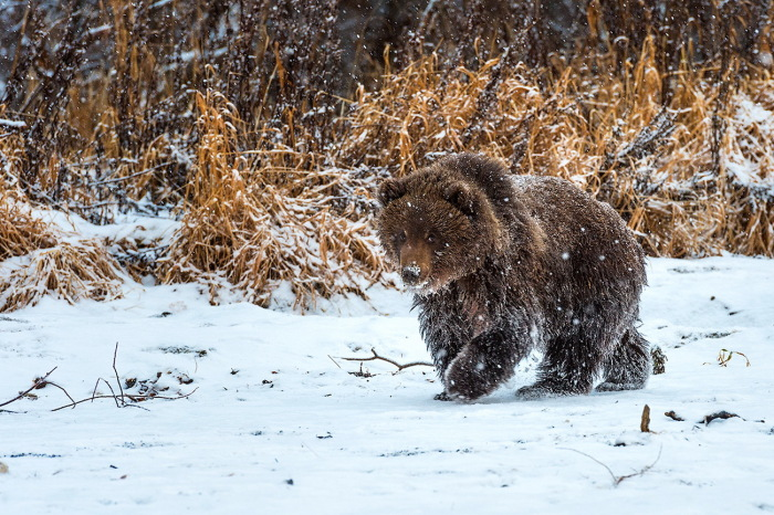 Мишке будет очень холодно. /Фото: wallhere.com.
