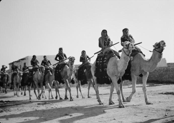 Верблюды отличались от лошадей в военном деле.