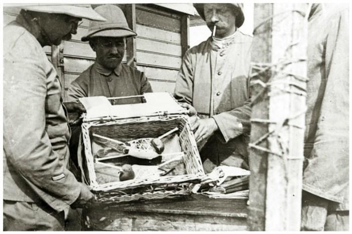 Даже сегодня армии некоторых стран сохранили голубиную почтовую службу.