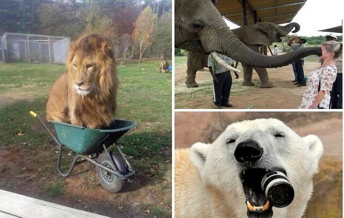 Комичные моменты из жизни людей, которые пришли в зоопарк.