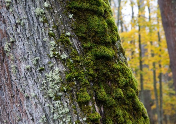 С какой стороны на самом деле растет мох.