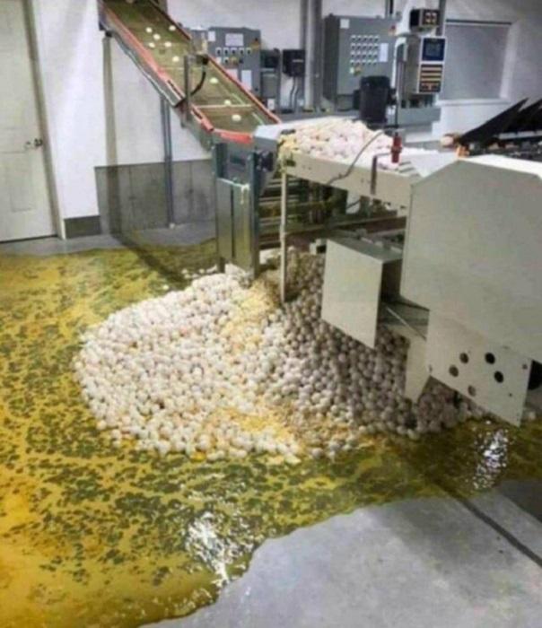 Самое время включить подогрев пола и приготовить огромную яичницу. | Фото: Cursed Image Sweatshop.