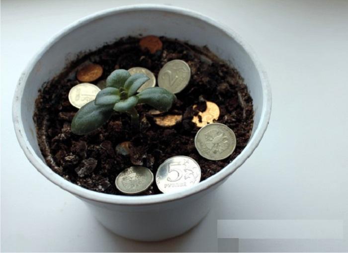 Монеткам не место в цветочном горшке.