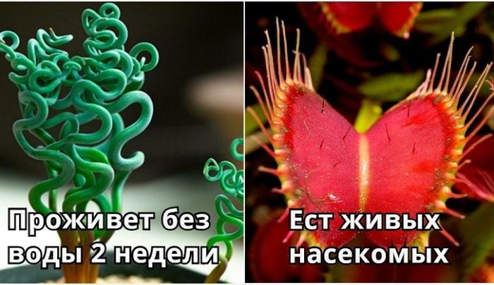 Экзотические растения, которые можно выращивать дома или в саду.