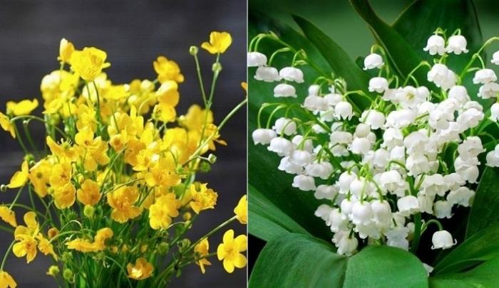 10 опасных растений для дачи.