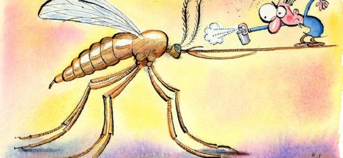 Как спастись от зуда после укуса комара. | Фото: theislandjournal.files.wordpress.com.
