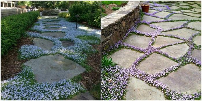 Дорожка из дикого камня всегда выглядит красиво, а украсив её цветами будет ещё лучше смотреться.