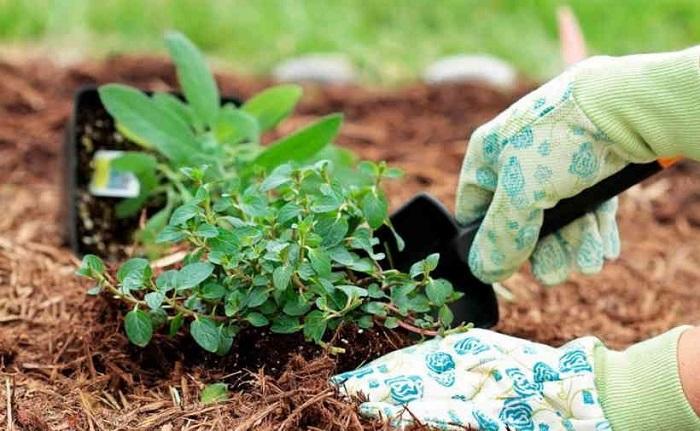 Использование дренажа на грядке понадобится для тех, у кого на даче глинистый или заболоченный грунт.