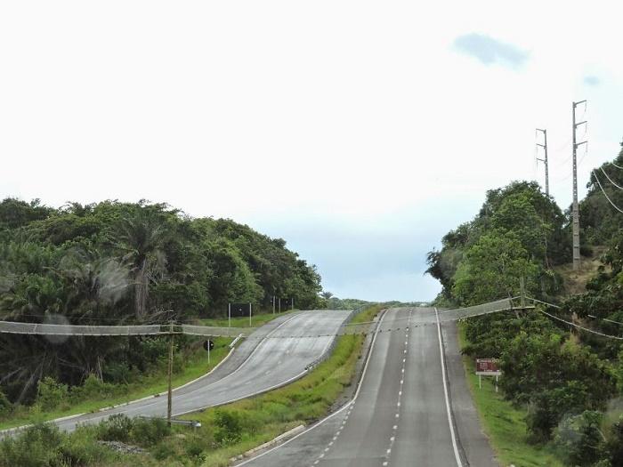 Канатный мост для обезьян и других животных над автомобильным шоссе. Мост для животных пересекает дорогу в Баие.
