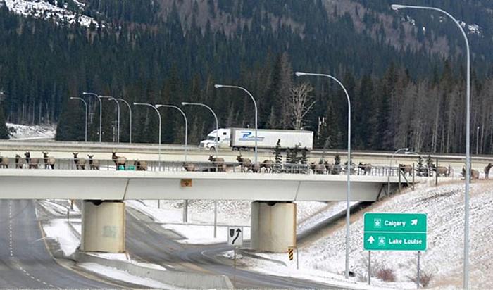 Мост для диких животных.