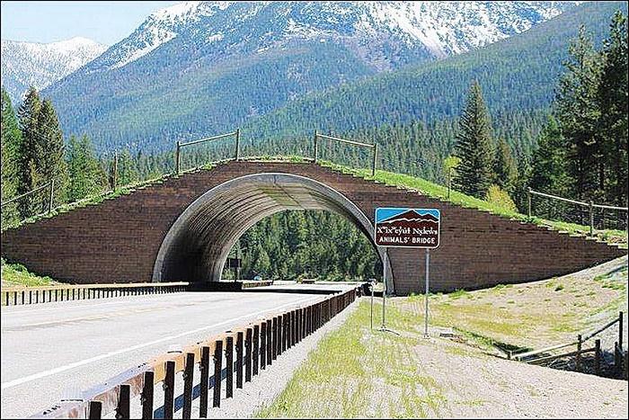 Мост для безопасного перехода животных.