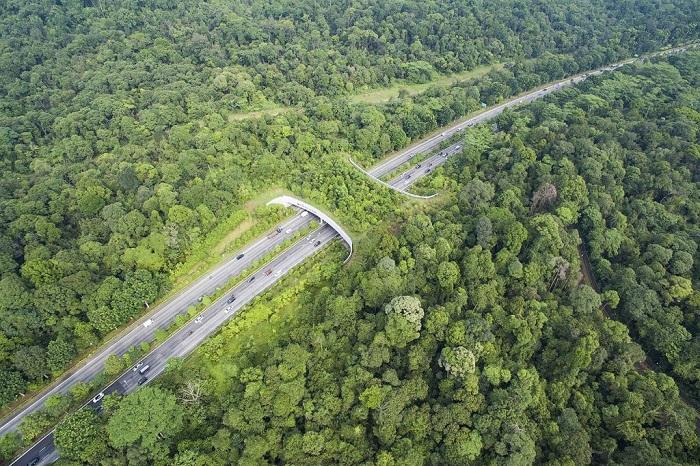 Шикарный вид на озелененный мост для животных.