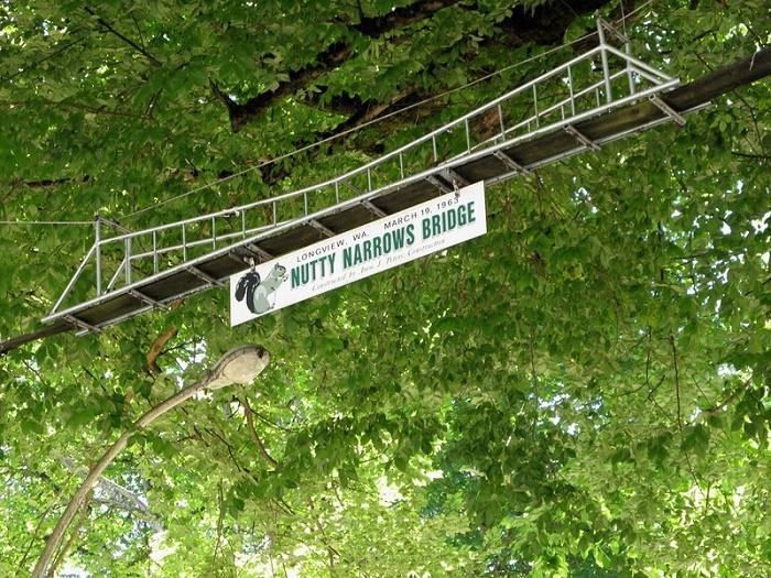Мост для белочек.