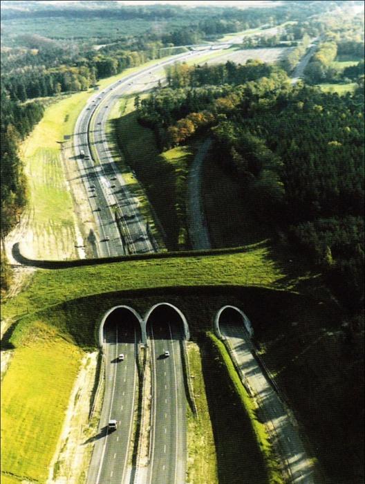 Мосты для животных.