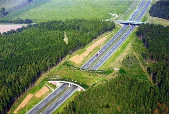 Зеленый мост для диких животных над автомобильным шоссе.