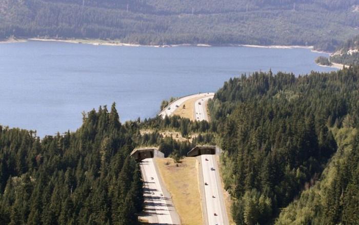 Озеро Кичелус, мост для животных.
