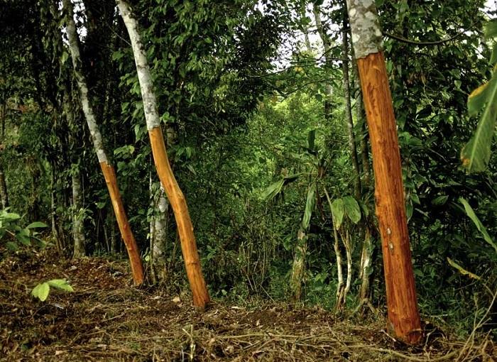 Корица используется в большинстве случаев как пряность.