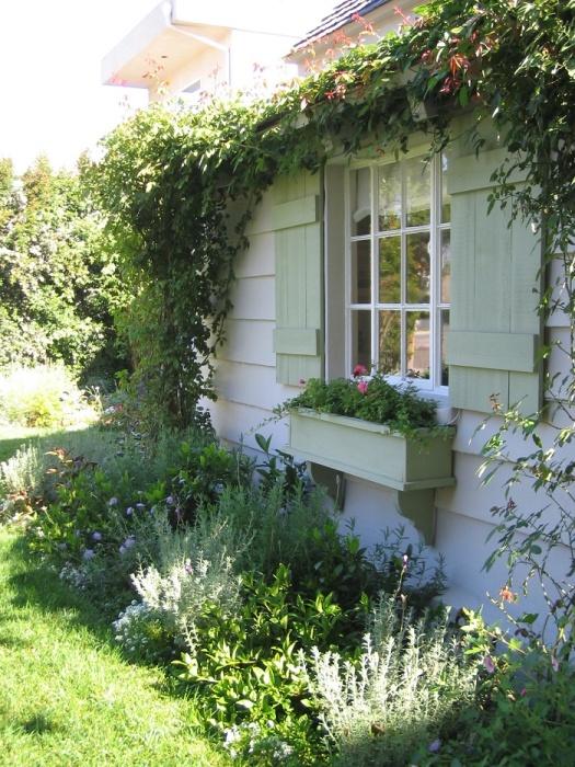 Вьющиеся насаждения придадут особую красоту дому.