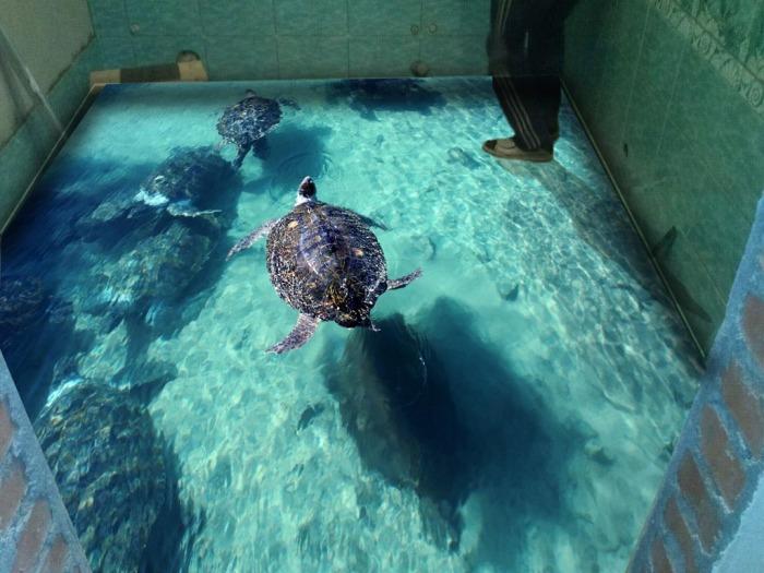 Большая черепаха. \ Фото: bouw.ru.
