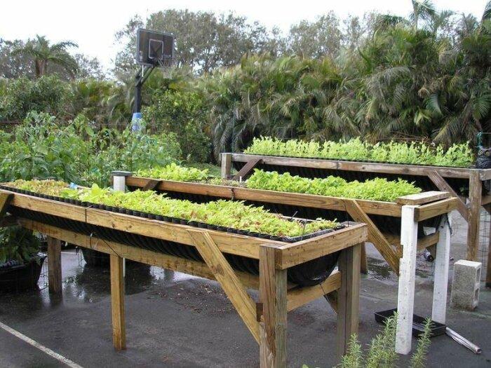 Конструкции из дерева. \ Фото: davesgarden.com.