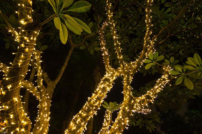 Светлячки.