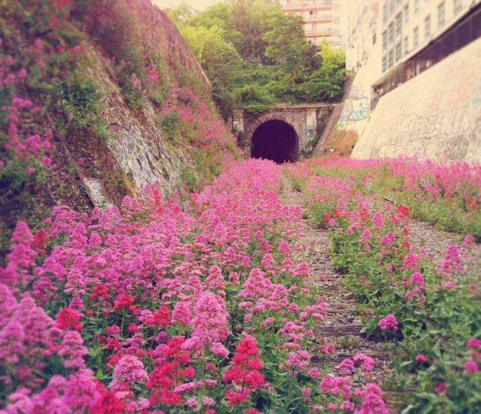 Заброшенная городская железная дорога в Париже. \ Фото: Заброшенная yameraktan.com.