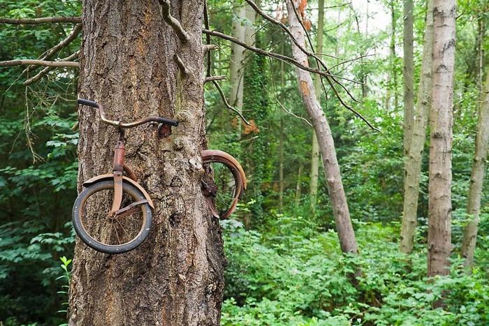 Велосипед съеден деревом, остров Вашон, Штат Вашингтон. \ Фото: zona.live.