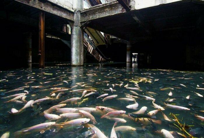Заброшенный торговый центр захвачен рыбой, Бангкок. \ Фото: yenisafak.com.