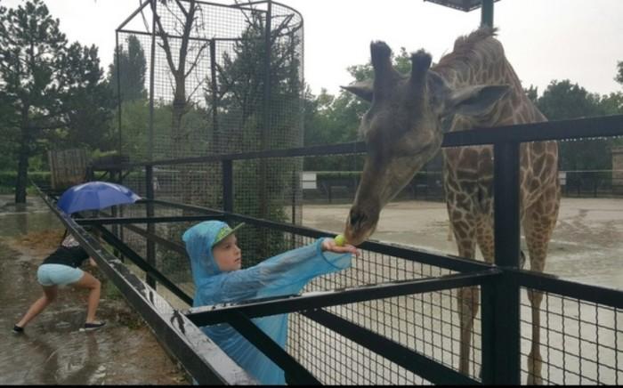 Благодаря девушке с зонтиком жираф не привлёк внимания. \ Фото: onedio.com.