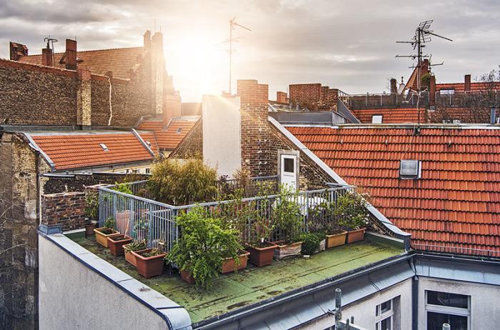 Огород на крыше.
