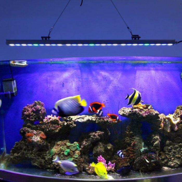 Диодные, люминесцентные и лампы накаливания, наряду с другим оборудованием, необходимы для поддержания полного жизненного цикла в замкнутом водном пространстве.