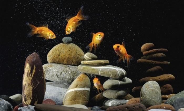 При оформлении аквариума своими руками помните, что можно применять только безопасные материалы, которые не выделяют токсины.