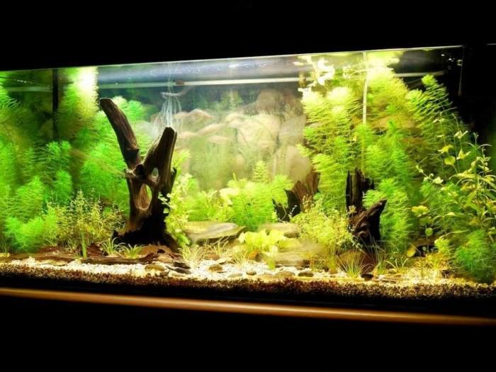Используйте камушки, коряги и прочие элементы декора для оформления аквариума.