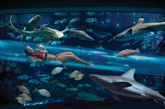 Бассейн наполнен акулами, экзотическими рыбами и другой морской живностью.