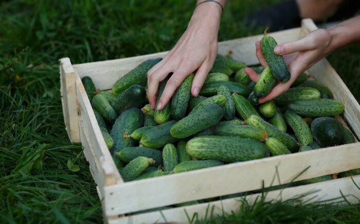 Не забывайте про нюансы повышения урожайности. \ Фото: everydaycheapskate.com.
